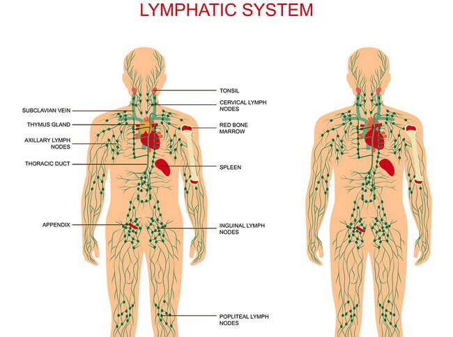 Swollen Lymph Nodes – HOMEOPATHIC TREATMENT BY DR. TSAN
